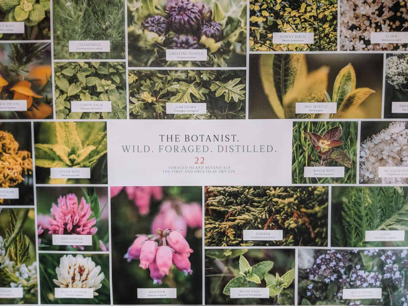 Reasons To Love The Botanist Gin From Scotland's Isle of Islay, Islay distilleries, Bruichladdich distillery, Islay gin