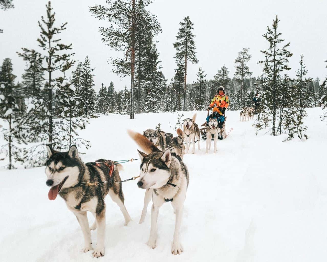 A sled being pulled by a group of huskies Finnish Lapland, Lapland destinations, Lapland Finland, Inghams