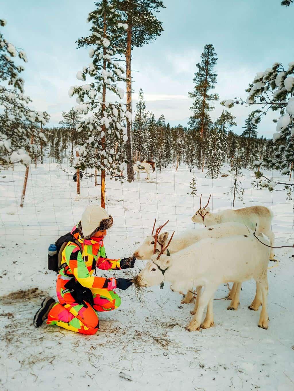 a girl feeding baby reindeer Finnish Lapland, Lapland destinations, Lapland Finland, Inghams