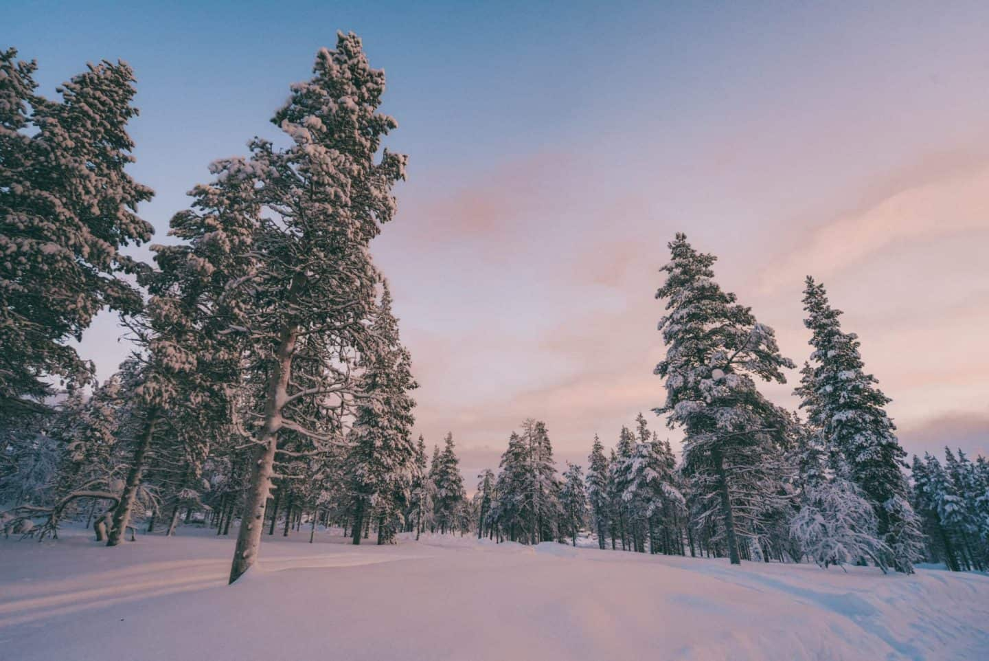 A forest of snow covered trees Finnish Lapland, Lapland destinations, Lapland Finland