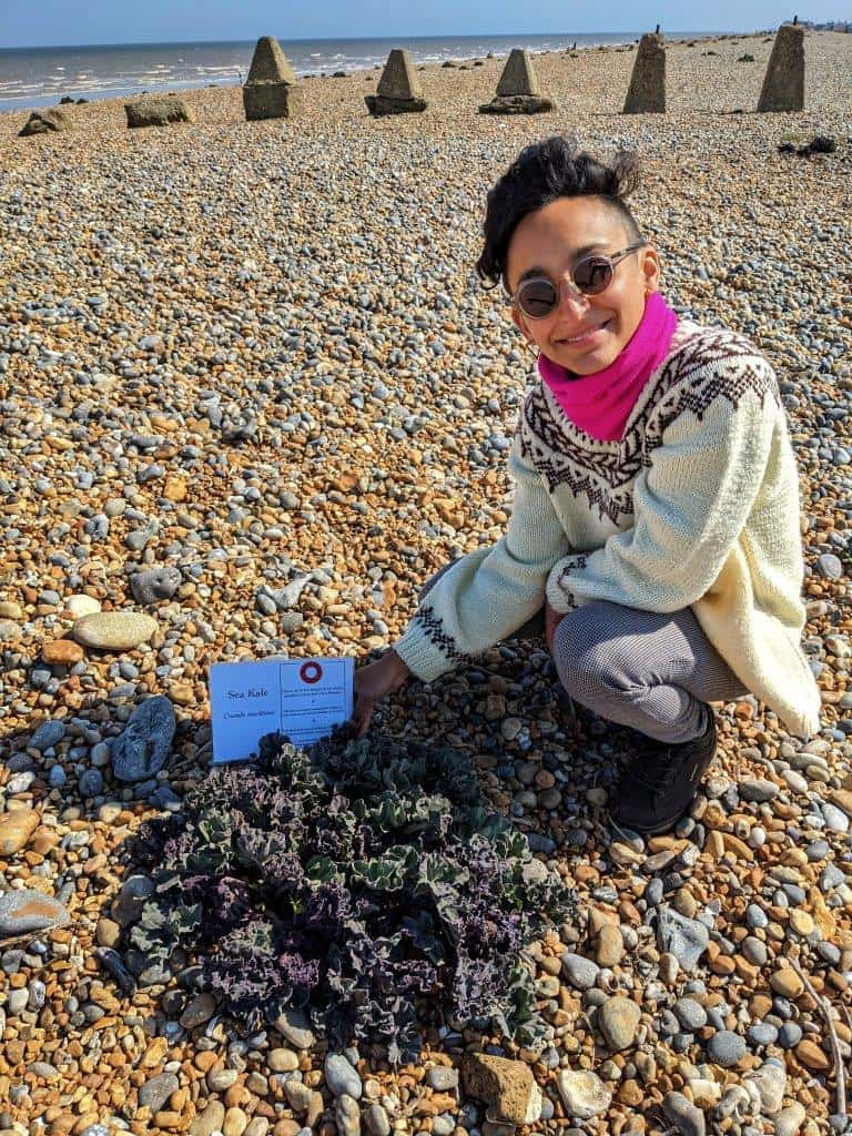 A girl crouched down on a pebble beach looking to the camera, and holding a sign that reads 'sea kale' behind a mass of leaves growing out of the pebbles