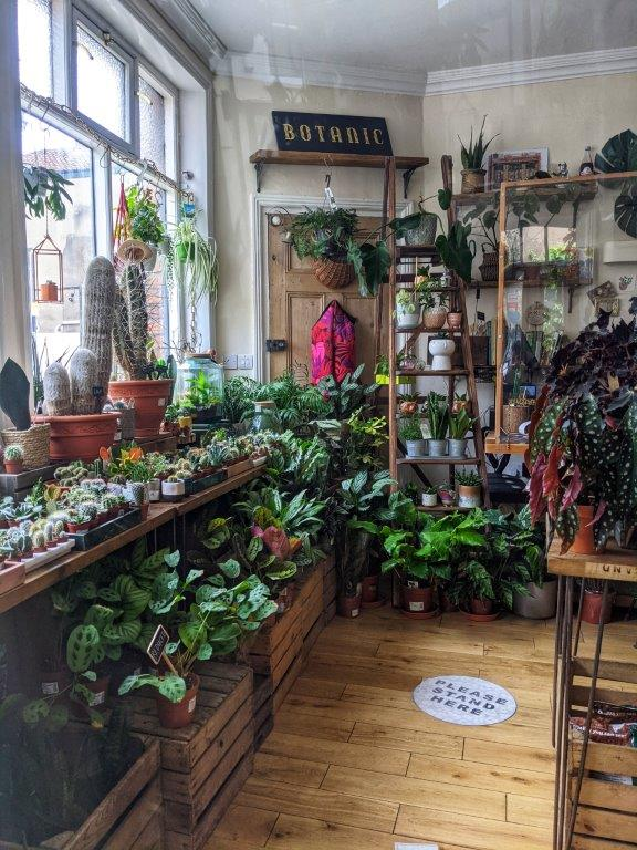 The inside of a shop crammed full with verdant houseplants of every size