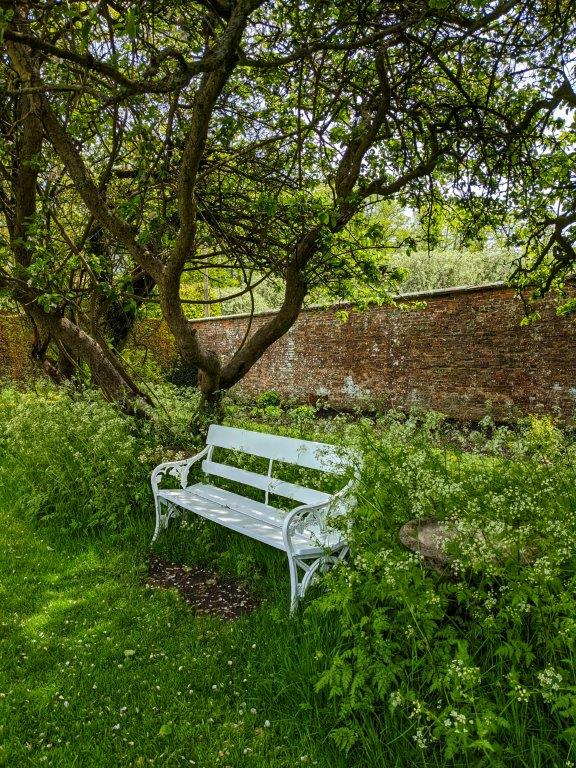 A white wooden bench with white metal arm rests surrounded by frothy cow parsley beneath the boughs of a tree